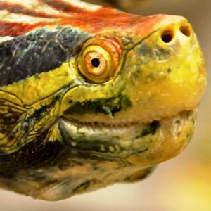 Profile picture for phelonius