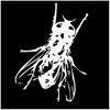 elgatoconmoscas