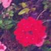 zahradáři