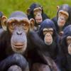 6 Monkeys