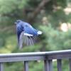 bluebirdgone