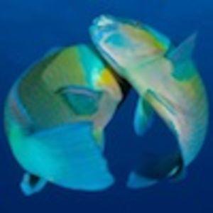 Profile picture for Zen Waterman