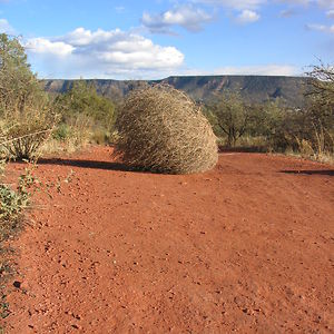 Profile picture for Tumbleweed Pictures