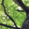 Georgetown EnvironmentInitiative