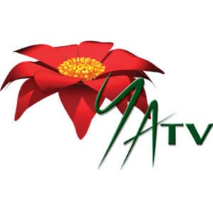 Profile picture for Young Asia Television