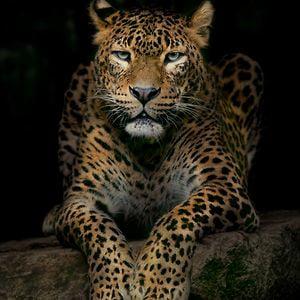 Profile picture for Natacha Pinto