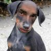 ManDog