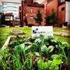 Mound Street Community Garden