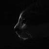 kittenita