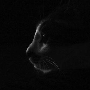 Profile picture for kittenita