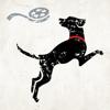 Lucky Dog Films