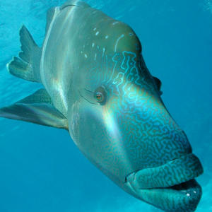 Profile picture for Protect Our Coral Sea