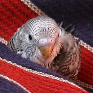 Profile picture for bogo rodriguez