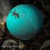 Harvey Wang
