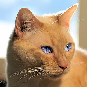 Profile picture for Azeazeazeaze