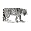 The Bengal Stripe
