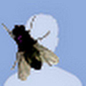 Profile picture for Jesse Fung