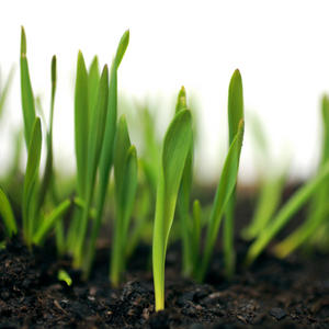 Profile picture for Heart Soil for Gospel Seed