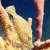 DNS Diving   Grand Cayman