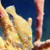 DNS Diving | Grand Cayman