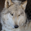 Lockwood Animal Rescue Center