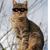 Yuki the Cat