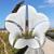 Omni Amelia Island Plantation