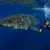 Shaolin Sea Bass
