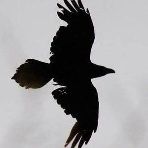 Profile picture for Garik Raven