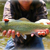 southernfly