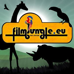 Profile picture for Filmjungle