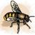BeeBea9