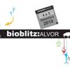 bioblitzportugal