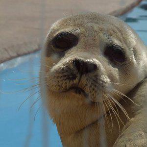 Profile picture for SealbeardS