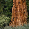 Sequoia ForestKeeper