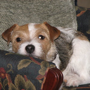 Profile picture for William Coady