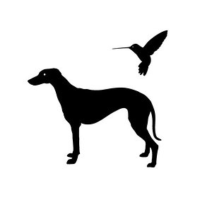 Profile picture for galgo y colibrí