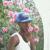 bajwa halfan