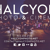 Halcyon Photography