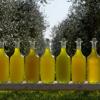 Colonna Olive Oil