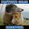 Proyecto Galgo Argentina
