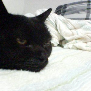 Profile picture for Blackcat