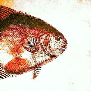 Profile picture for Ben Gosselet