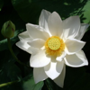 Mindfulness Meditation Centers