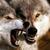 Jagwolf Media