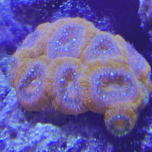 Profile picture for Live Reef Tv