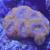Live Reef Tv
