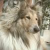 Albert&Lassie4Ever