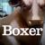 Boxer Brand Design