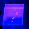 biogenfutures